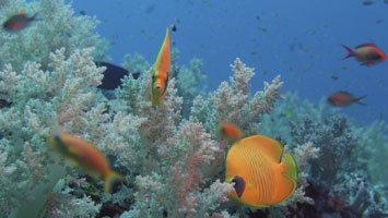 Dive Safari North: Aquarium
