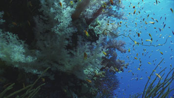Dive Safari North: Coral Garden